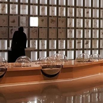 Herbarium Wall